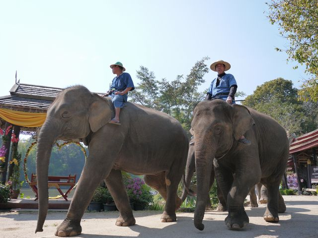 タイ チェンマイ タイ国政府観光庁インターンシップ型研修8日間